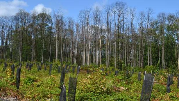 Forêt - Plantation