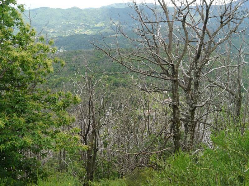 Forêt - Maladies des arbres